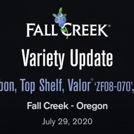 Variety update july29