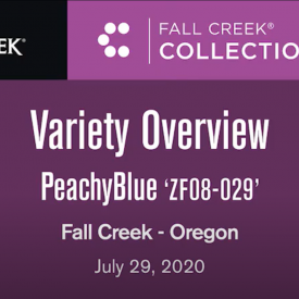 Variety update peachyblue