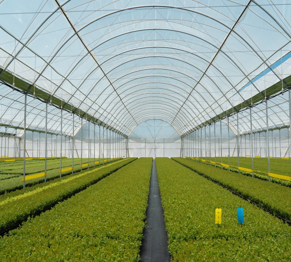 South_Africa_Greenhouses.jpg