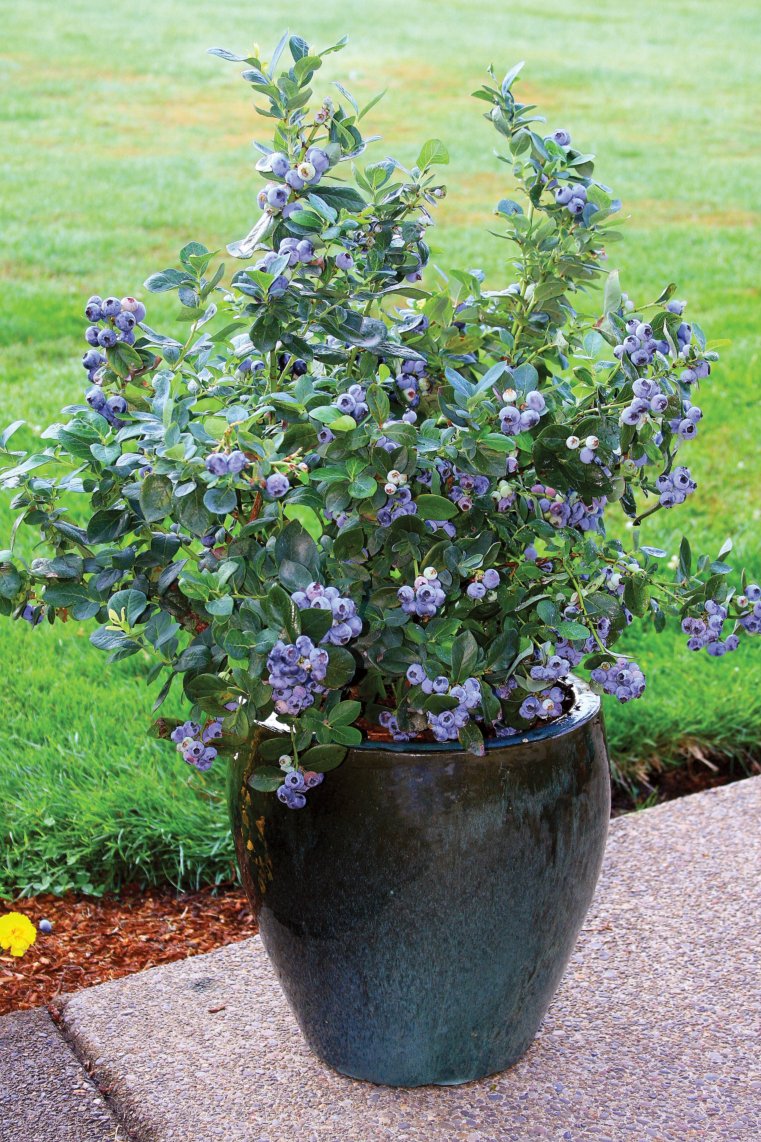 There Is True Commercial Landscaping Bushes Shrubs