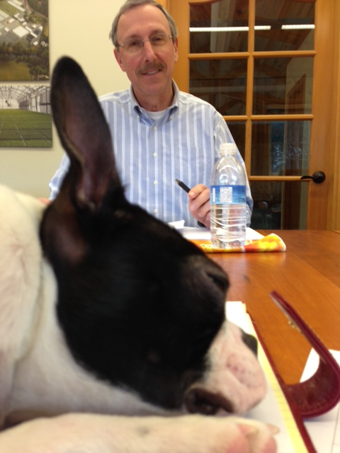 Boston Terrier, Cakes, making himself comfortable in the shareholders' meeting!